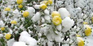 Подготовка цветника к зиме